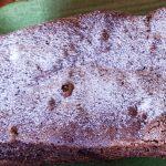 Gâteau au chocolat, amandes & noisettes