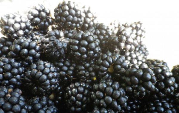 Verrine mascarpone et coulis de mûres
